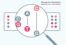 Blueprint-Genetics