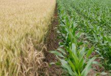 crops-MoA Technology