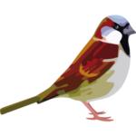 Sparrow Quantum