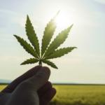 denecum-cannabis