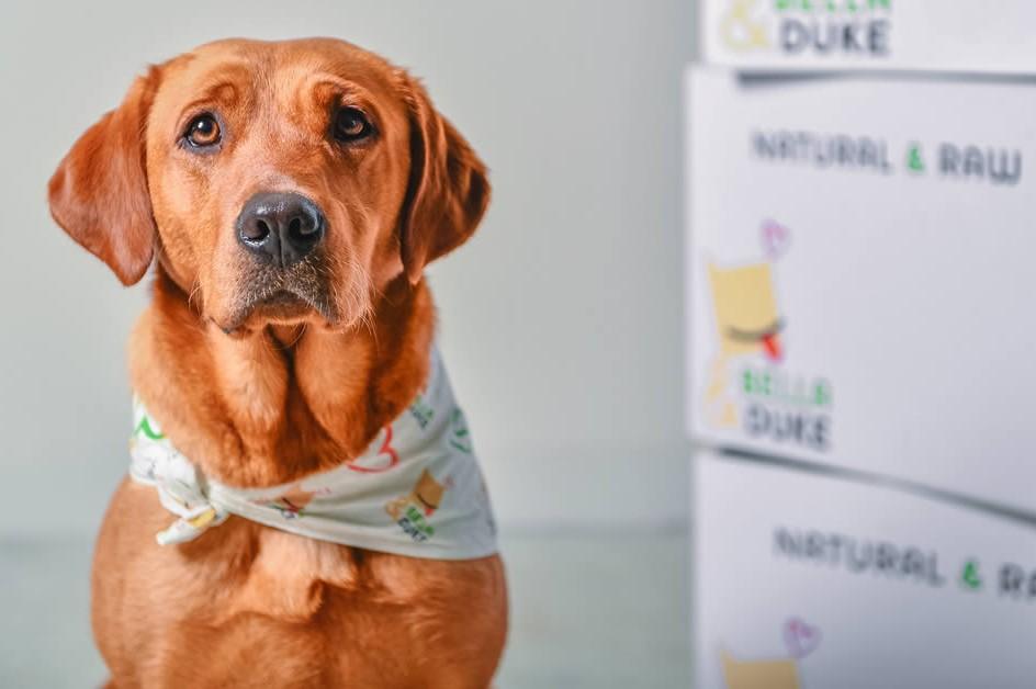 Scotland-based Bella & Duke raises €3.9 million to grow its raw pet food  delivery   EU-Startups