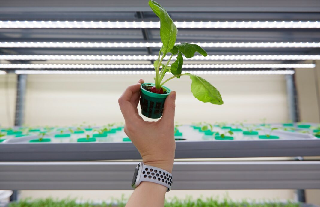 Helsinki-based iFarm raises €3.3 million for its automated indoor farming solutions